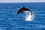 You may see a dolphin jumping out of the water on the Dolphin Watching Tour